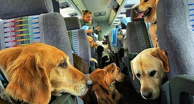 Aereo Privato Cani : Aerei sì ai cani in cabina con delta parte la rivoluzione