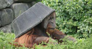 Zoo argentina chiuso