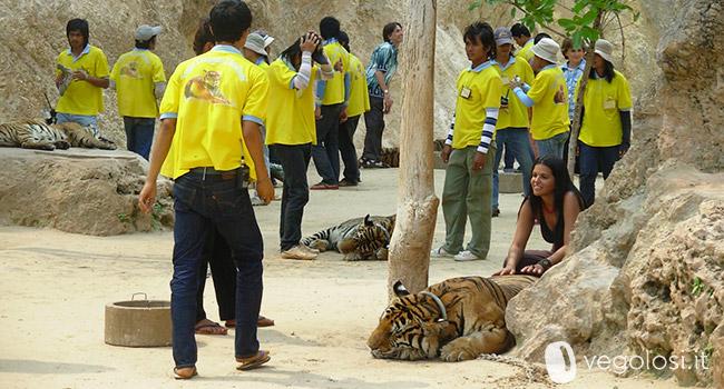 TripAdvisor tutela animali, stop interazioni con turisti