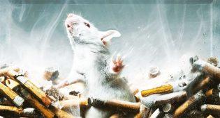 Test sugli animali per fumo, droga e alcool ancora per tre anni