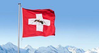 svizzera cibo insetti