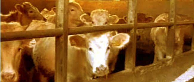 Impatto del consumo di carne