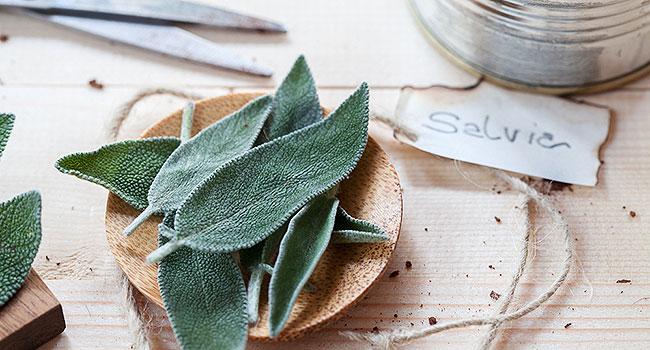 Salvia - ©Vegolosi.it