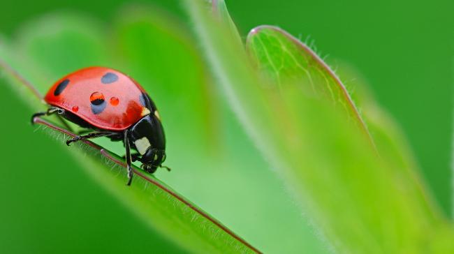 700-864718<br /><br /><br /> © Martin Ruegner</p><br /><br /> <p>Close-Up of Ladybug