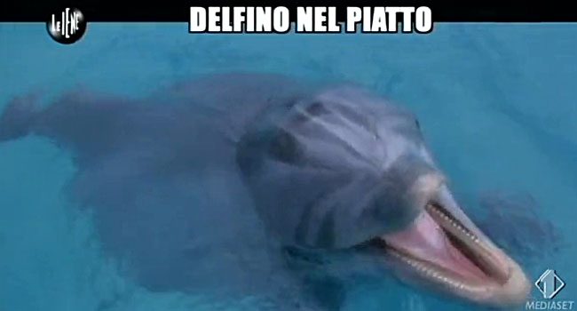 Carme di delfino