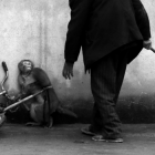 MONKEY TRAINING FOR A CIRCUS