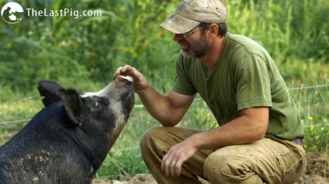 last pig