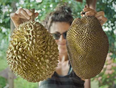 Jackfruit durian