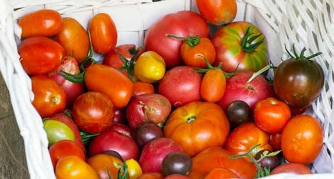 vegetables-930753__340