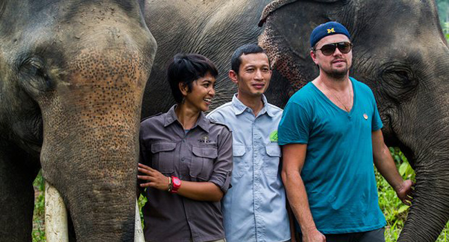 Di Caprio in difesa di elefanti e oranghi