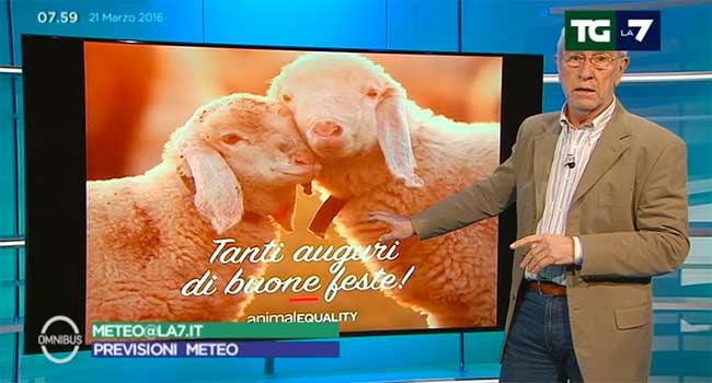 La7 sottocorona agnello