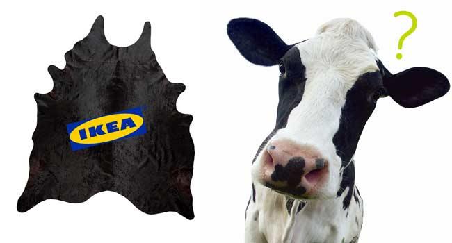 Tappeti Mucca Roma : Ikea tappeti di pecora e mucca è bufera