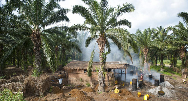 olio di palma storia