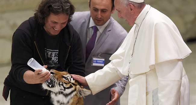 Papa tigre