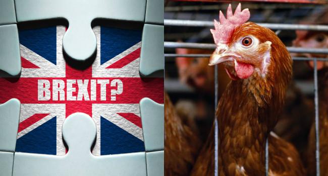 brexit diritti animali