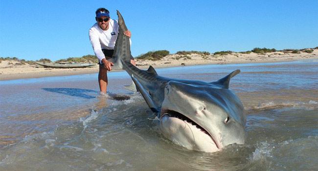 squali-tigre-australia-selfie