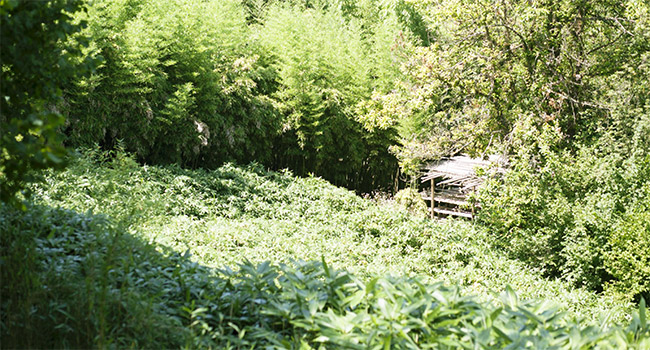 Bambù Italia