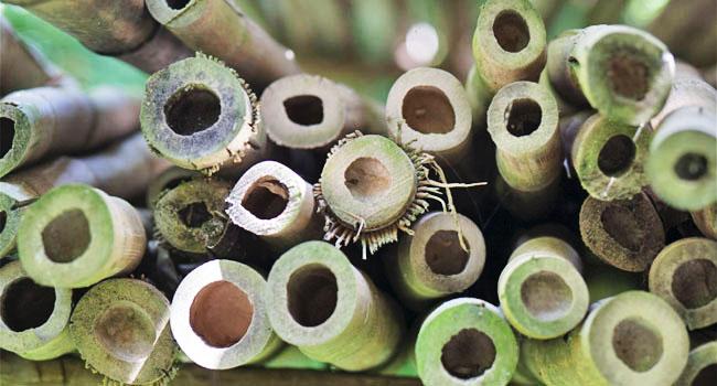 Bambù: \