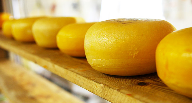 Gary formaggio vegano