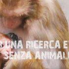 Ricerca scientifica senza animali