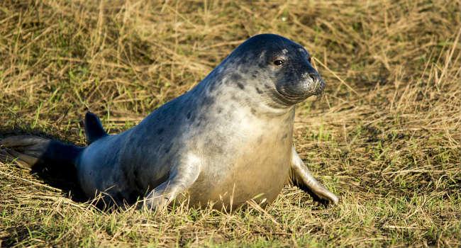seal-1596709_960_720