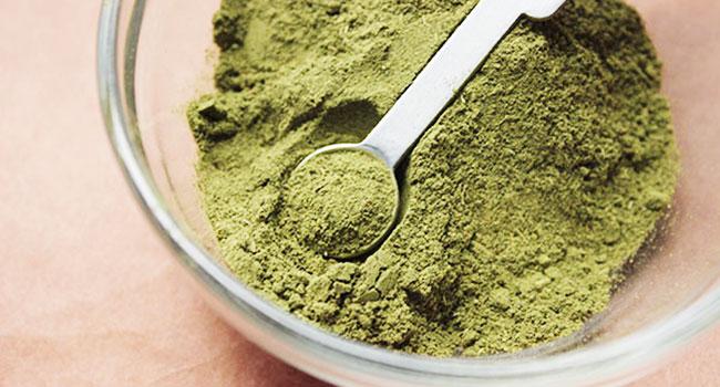 Stevia usi propriet e benefici della pianta che for Stevia pianta