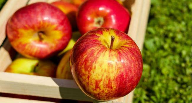 apple-red-fruit-ripe-144245