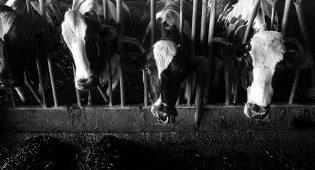 Storia degli allevamenti intensivi