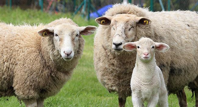 Cosa indossare al posto della lana