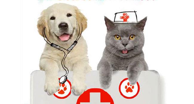 Pronto soccorso cani e gatti libro