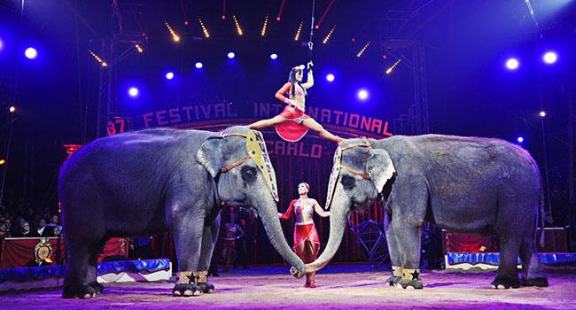 Circo madrid