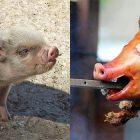 Concita di Gregorio vegetariani
