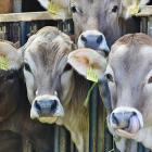 Quanto vivono gli animali negli allevamenti