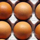 Perché i vegani non mangiano le uova