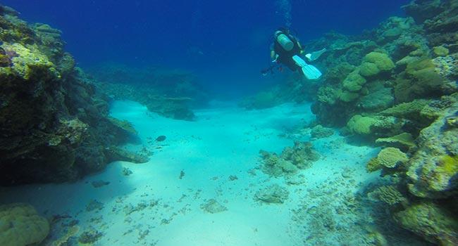 Barriera corallina autraliana morte