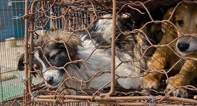 Svolta storica a Taiwan: legge vieta carne di cane e di gatto