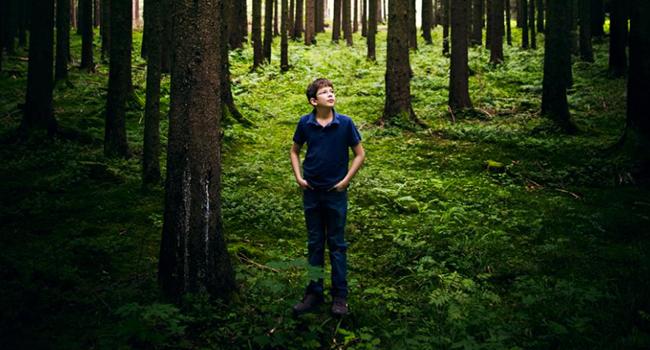 Bambino germania alberi