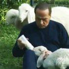Berlusconi agnello