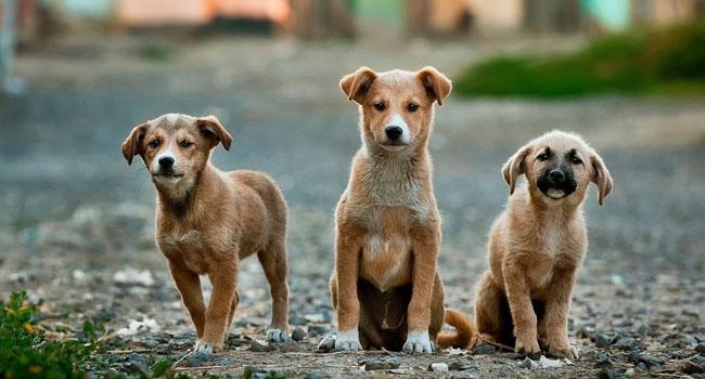 Occidentalis Taiwan: vietata carne di cane e gatto