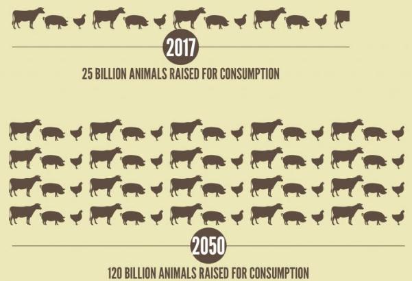 slow food meno carne