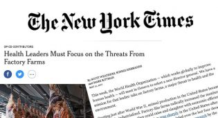 Allevamenti intensivi: lettera aperta del New York Times all'OMS