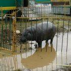 Circo animali maltrattati