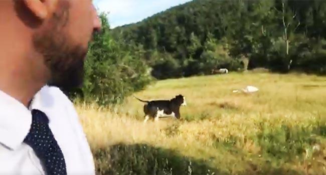 Mucche liberate a Parma