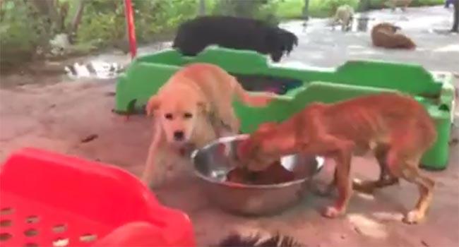 Festival Yulin Cani liberati