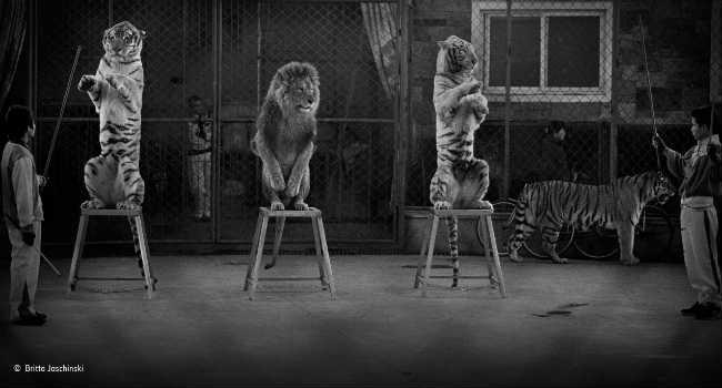 Britta jaschinski e la dignità perduta degli animali vegolosi