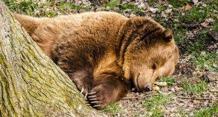 Uomo aggredito orso Trentino