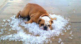 Caldo torrido e afa: come difendere i nostri animali, il vademecum Enpa