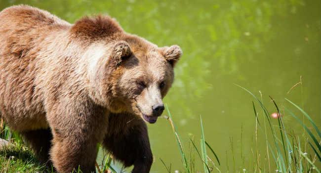 orso trentino cortometraggio