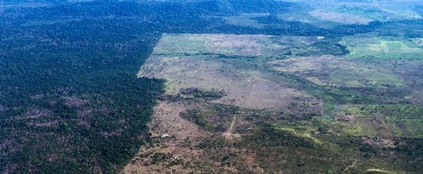 Deforestazione amazzonia allevamenti