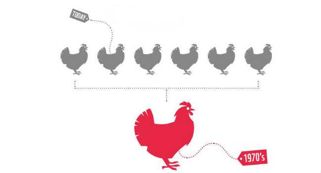 polli oggi anni '70